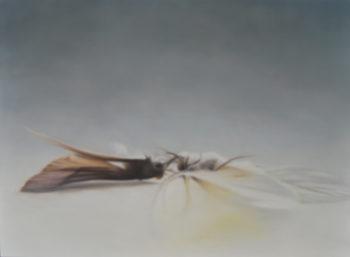 motte und schmetterling I (2013), 61 x 45 cm